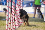 Dog_games_Summer_Niedziela_2015_2177.jpg